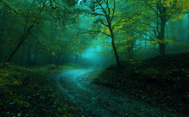 обои осень, лес, деревья, дорога картинки фото