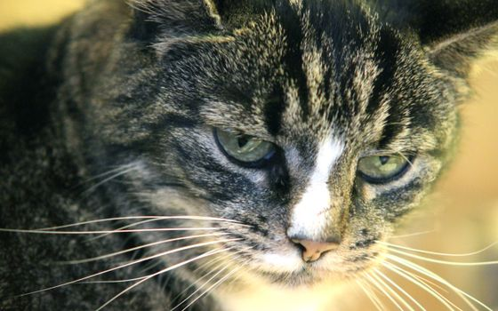 Photo free cat, face, mustache