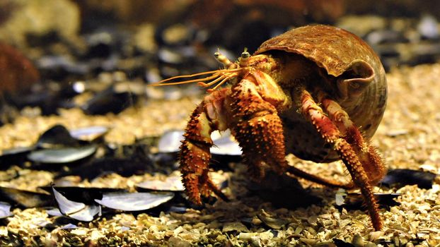 Photo free crab, paws, claws