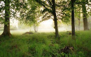 Бесплатные фото лето,лес,деревья,трава,туман