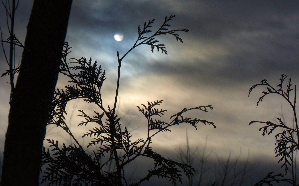 Фото бесплатно ночь, дерево, трава - на рабочий стол