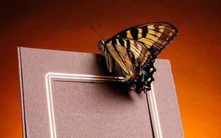 Бесплатные фото рамка,бабочка,крылья,узор,лапки,усики
