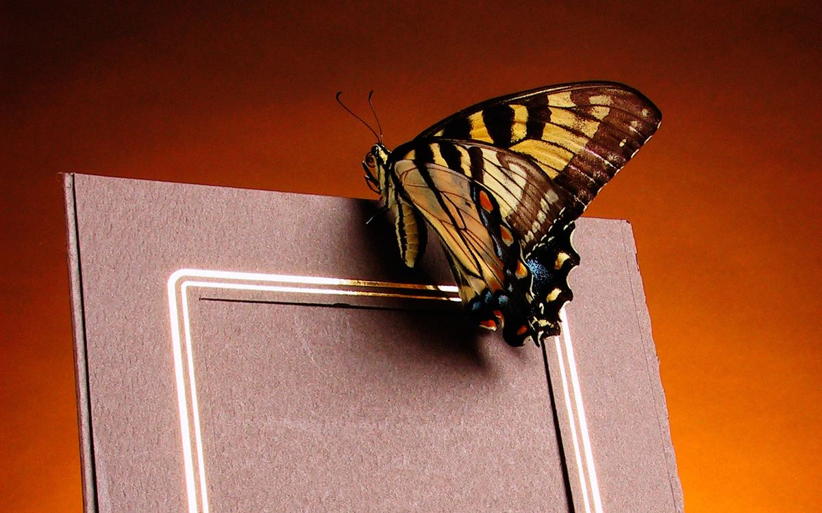 Free photo frame, butterfly, wings - to desktop