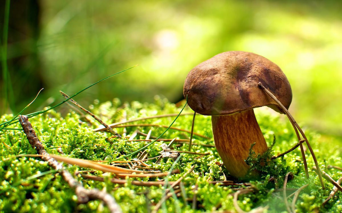 Обои гриб, белый, мох, земля, трава на телефон | картинки природа