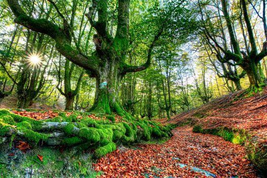 Заставки пейзаж, деревья, Otzarreta