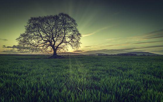 Photo free green field, landscapes, field