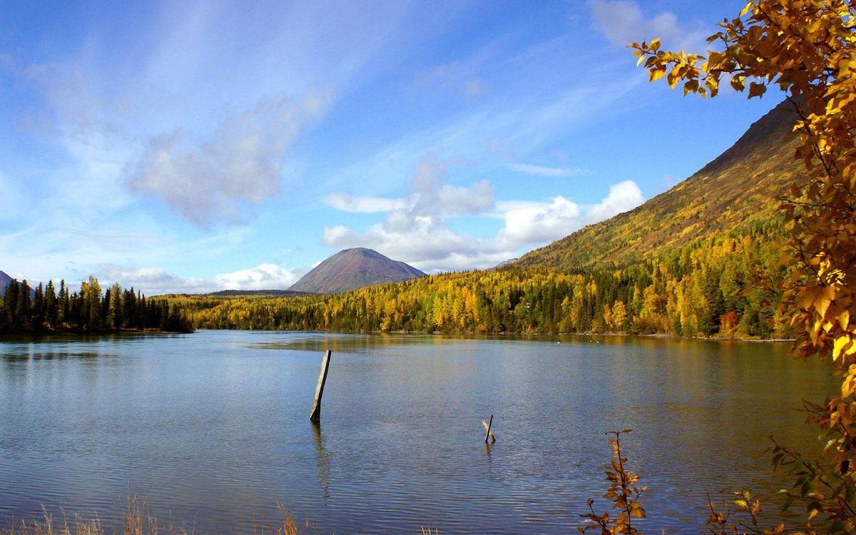 Обои осень, река, коряги картинки на телефон