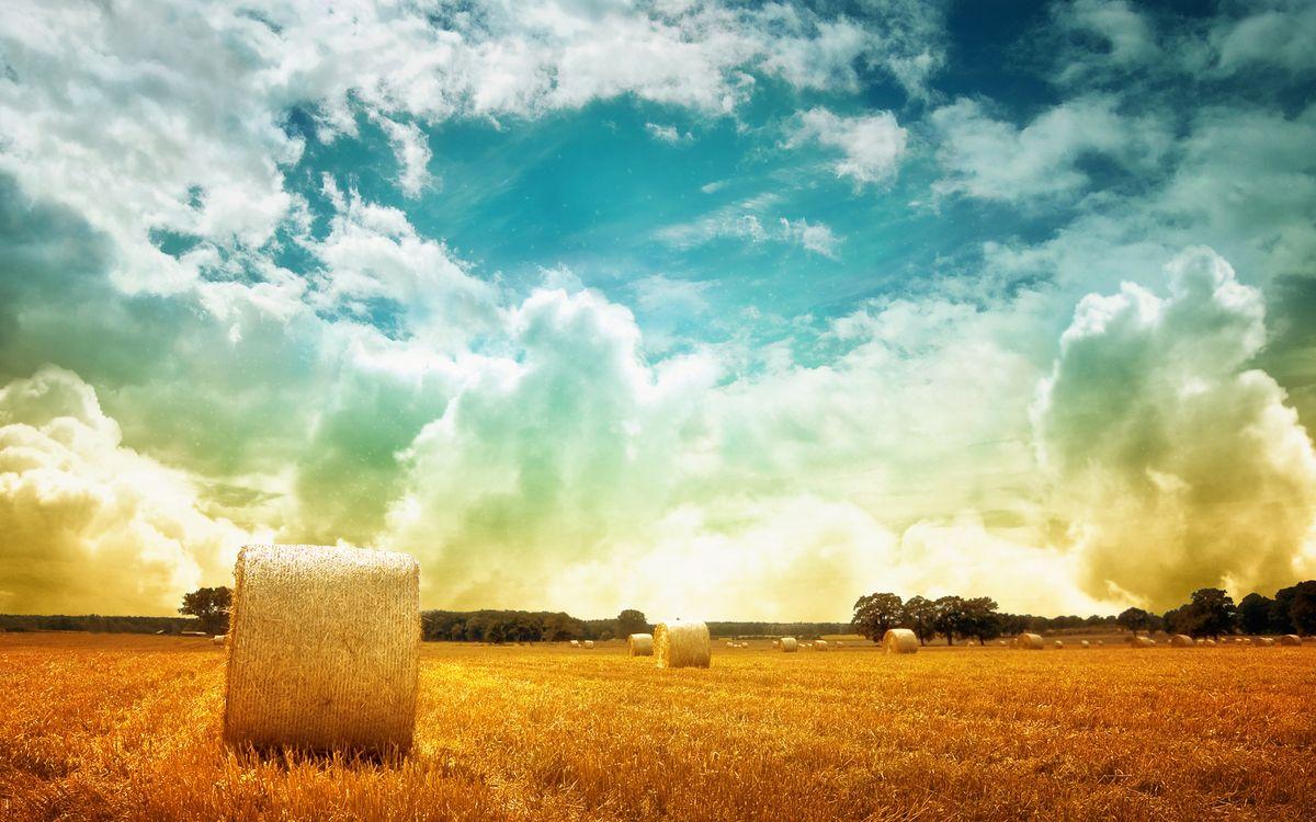 Фото бесплатно поле, тюки, салома, деревья, небо, облака, пейзажи