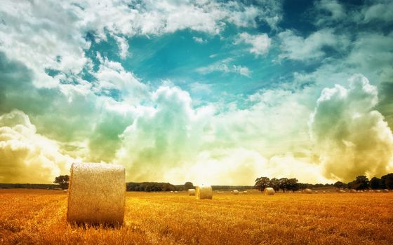 Photo free field, bales, salom