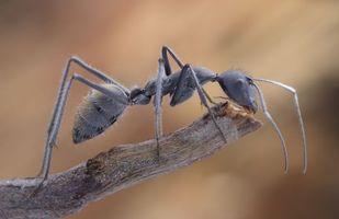 Бесплатные фото муравей,насекомое,макро