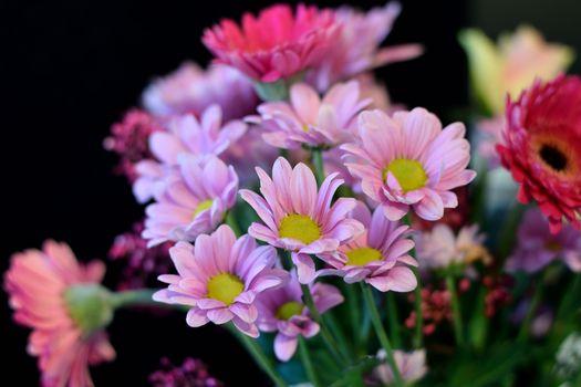 Фото бесплатно герберы, цветы, флора