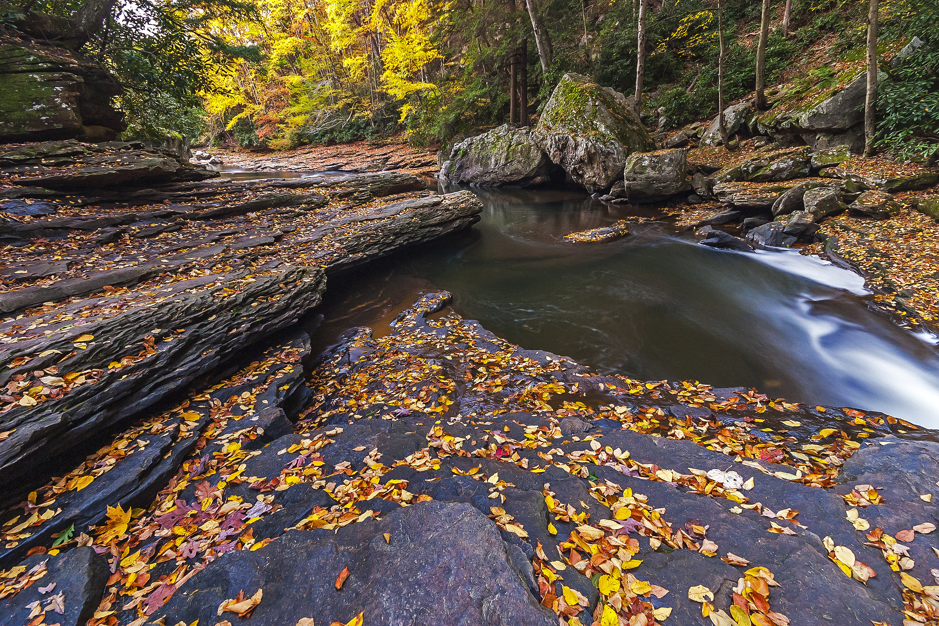 обои осень, лес, скалы, деревья картинки фото
