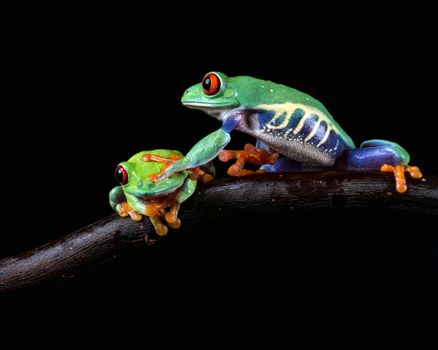 A beautiful screensaver amphibians, frog