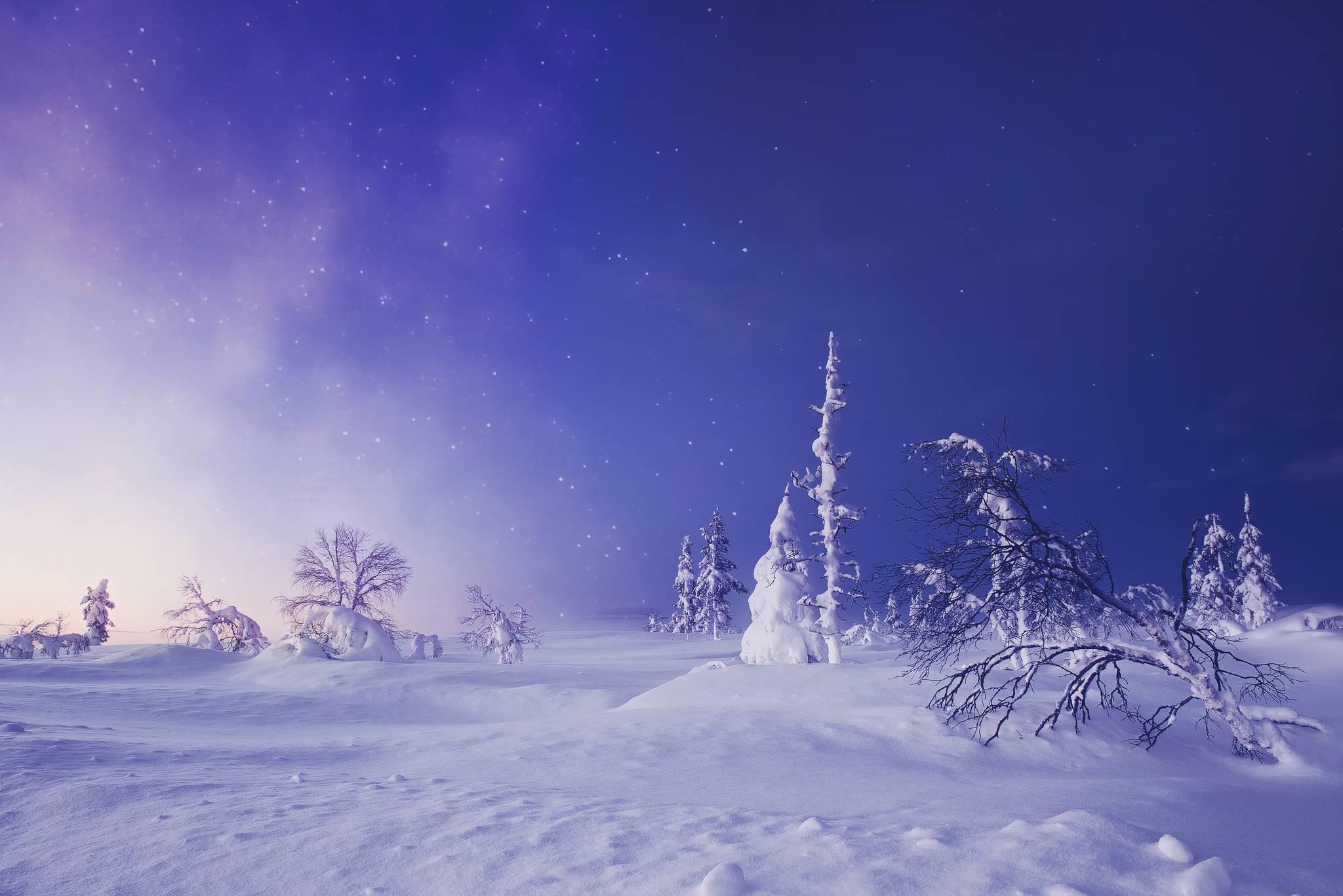Лапландия, Финляндия, деревья
