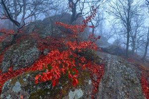 Фото бесплатно лес, камни, туман