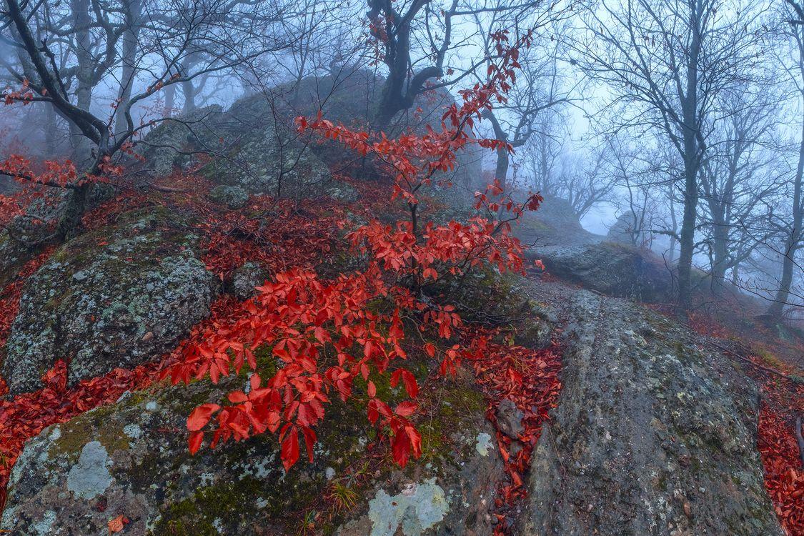 Фото бесплатно лес, камни, туман - на рабочий стол