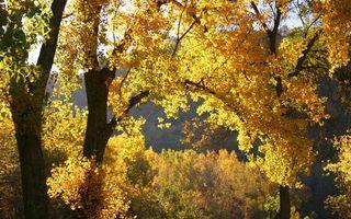 Заставки осень, желтые, лес