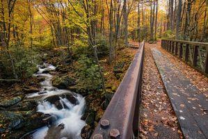 Бесплатные фото Теннесси, осень, лес, речка, деревья, мост, природа