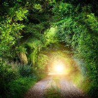 Бесплатные фото лес,деревья,дорога,солнце,солнечные лучи,пейзаж