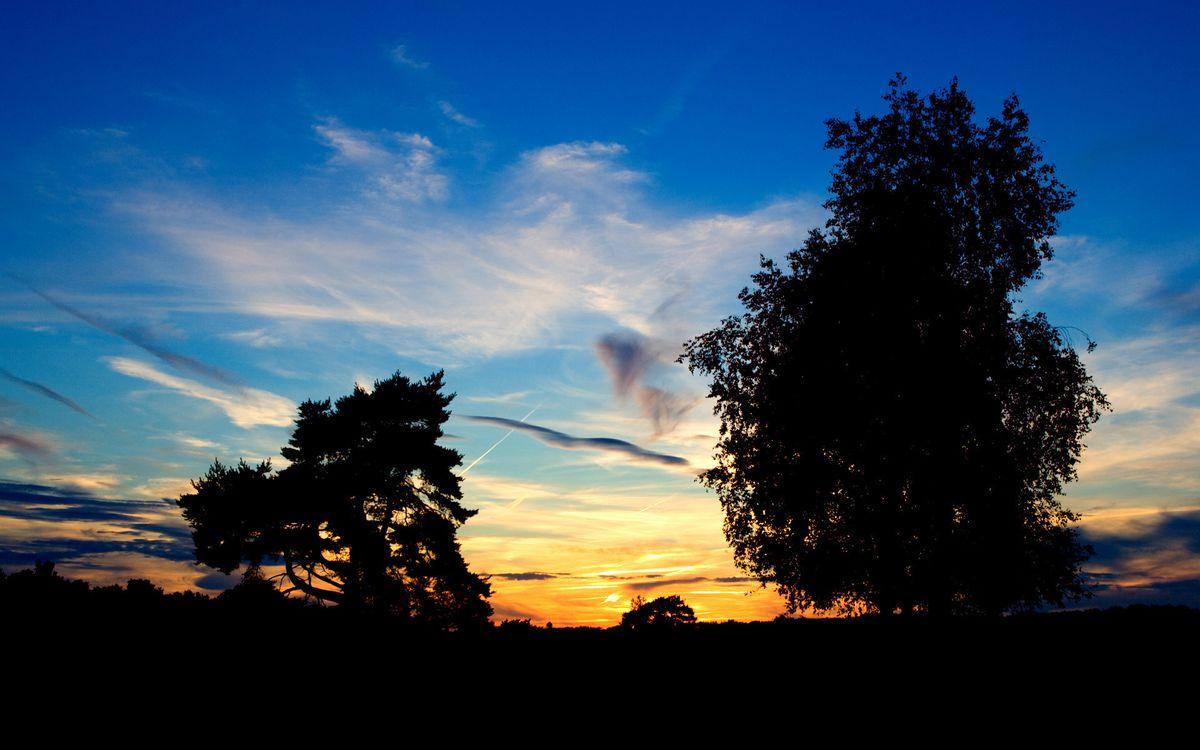 Фото бесплатно вечер, деревья, листва, небо, облака, закат, пейзажи