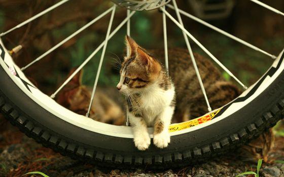 Бесплатные фото велосипед,колесо,спицы,котенок,морда,лапы