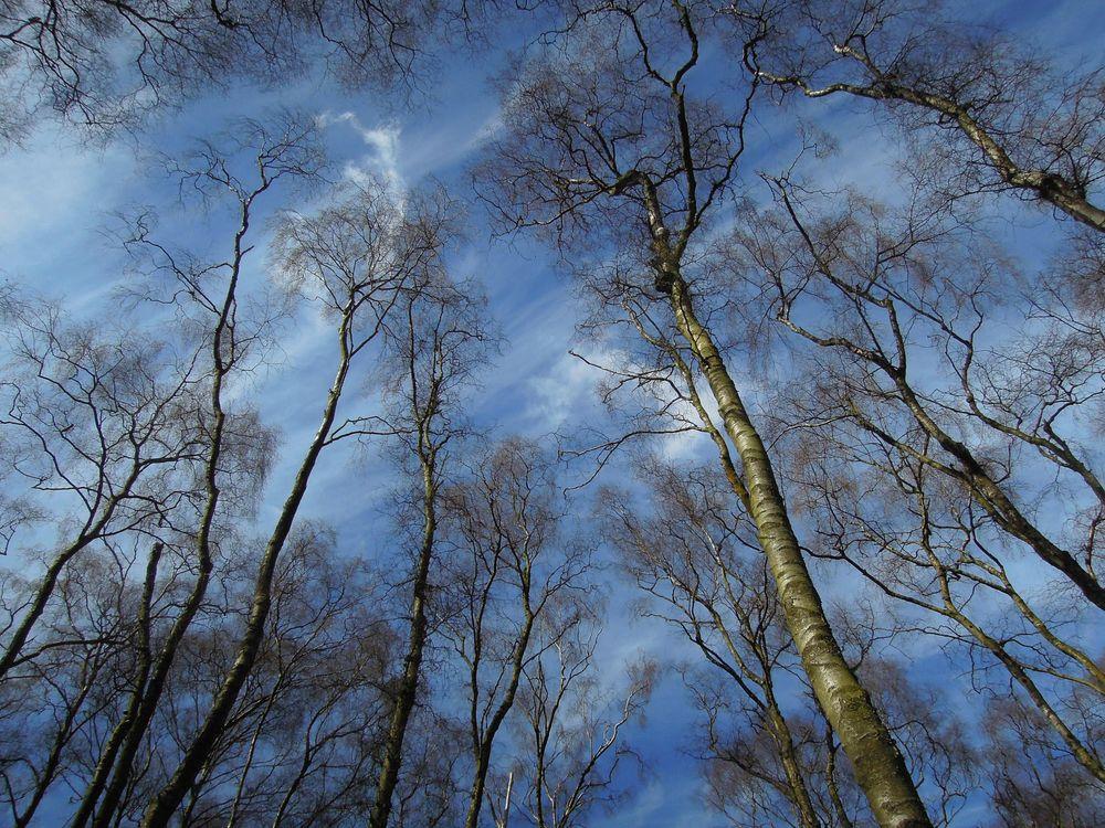 Обои зима, кроны, деревья, верхушки, пейзаж на телефон | картинки пейзажи
