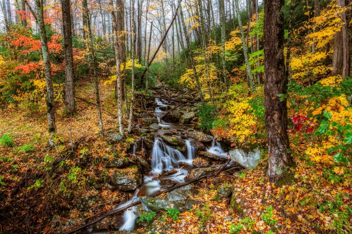 Фото бесплатно краски осени, Грейт-Смоки-Национальный парк, штат Теннесси, осень, лес, деревья, водопад, природа, пейзажи