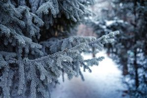 Бесплатные фото ветви ели,снег,зима