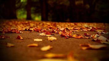 Бесплатные фото листопад,осень,парк,деревья