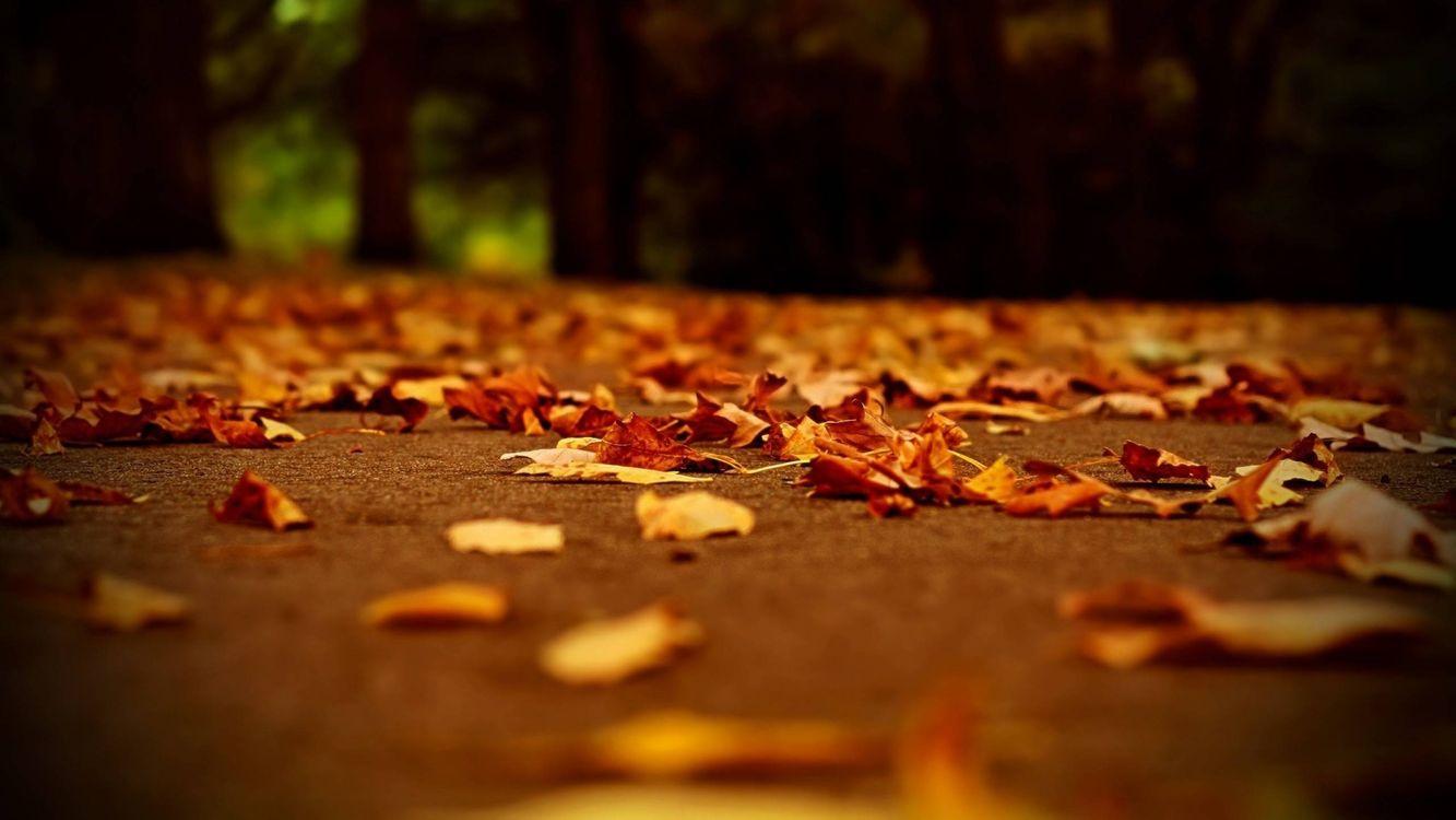 Фото бесплатно листопад, осень, парк, деревья, природа - скачать на рабочий стол