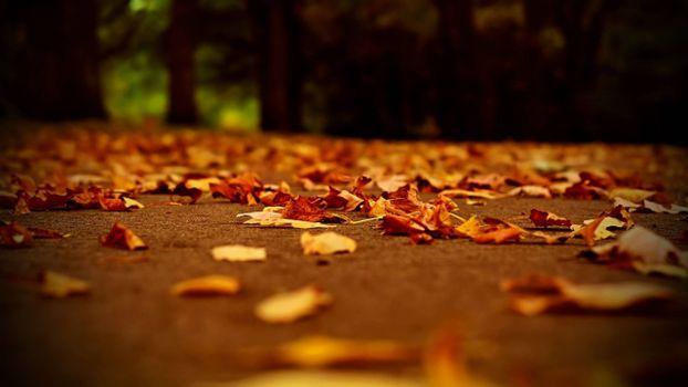 Фото бесплатно листопад, осень, парк