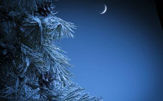 Бесплатные фото Луна,месяц,елка,ветви,иголки,зима