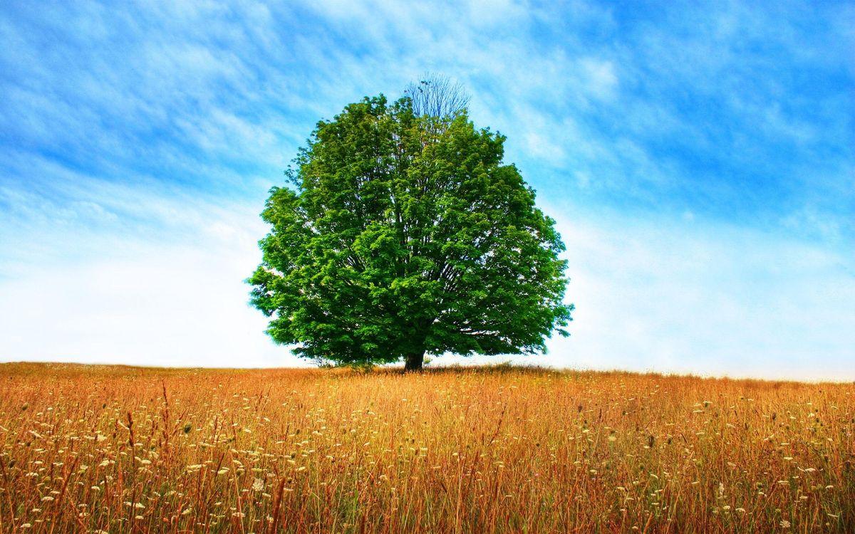 Фото бесплатно поле, трава, дерево, крона, небо, облака, природа