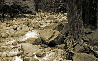 Бесплатные фото деревья,корни,камни,ручей,вода,течение