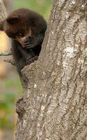 Бесплатные фото медвежонок,морда,лапы,шерсть,дерево,ствол