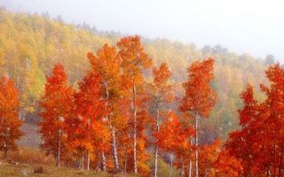 Фото бесплатно рисунок, осень, горы