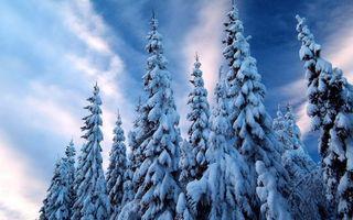 Бесплатные фото зима,деревья,ели,снег,небо,облака