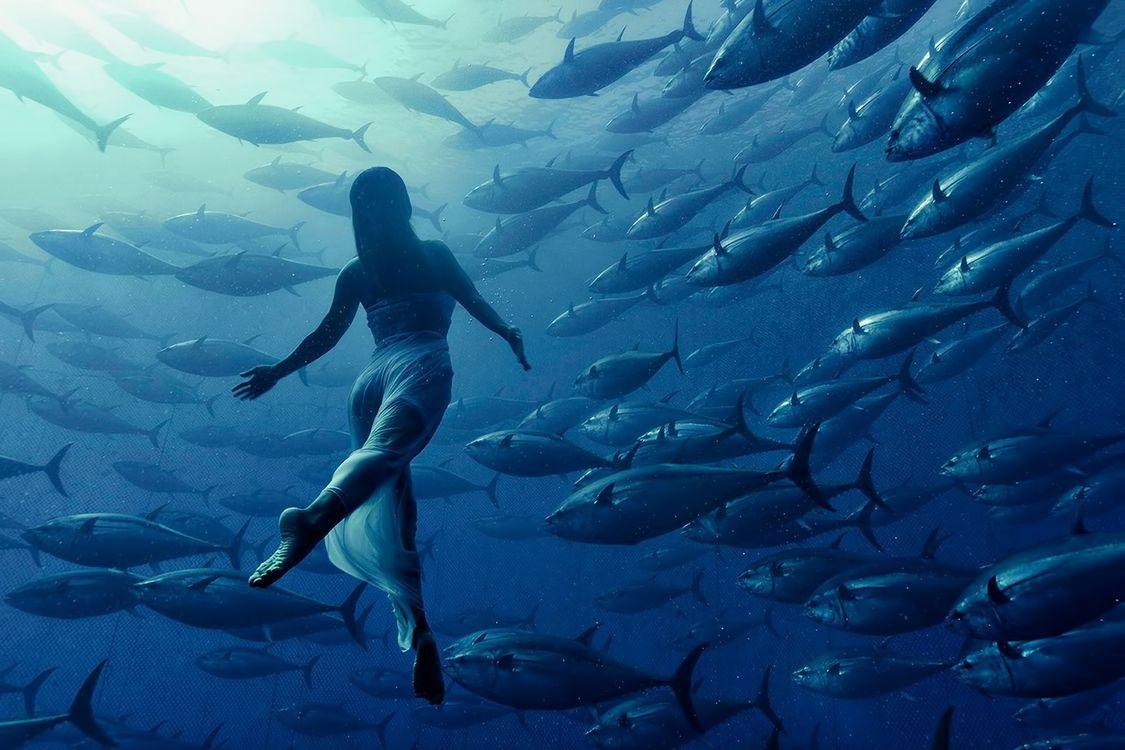 Фото бесплатно девушка, рыба, тунец - на рабочий стол
