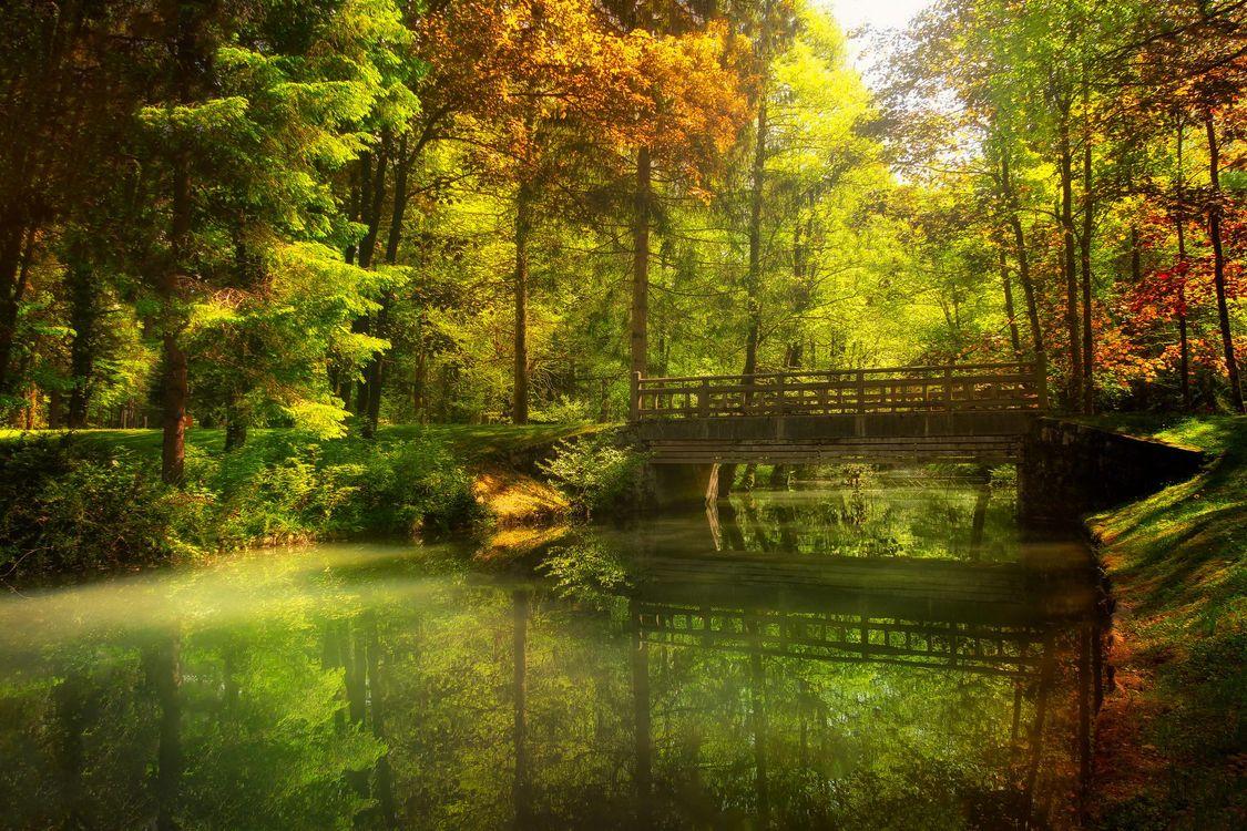 Фото бесплатно осень, лес, парк, канал, речка, мост, деревья, пейзаж, пейзажи