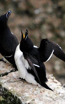 Фото бесплатно птицы, клювы, крылья