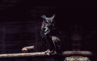Бесплатные фото филин,клюв,глаза,перья,крылья,лапы,ветка