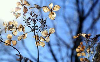Фото бесплатно листья, ветки, солнце