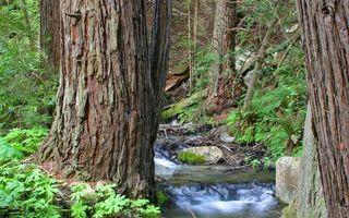 Заставки горы, ручей, течение, камни, ветки, трава, деревья