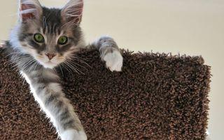 Бесплатные фото котенок,морда,глаза зеленые,лапы,шерсть