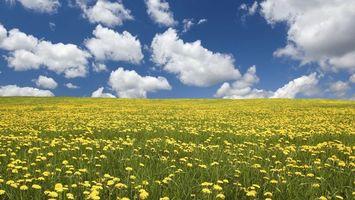 Заставки поле,трава,цветы,горизонт,небо,облака