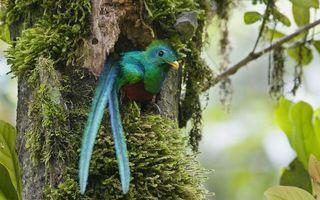 Заставки тропики,дерево,дупло,птица,перья,клюв,желтый