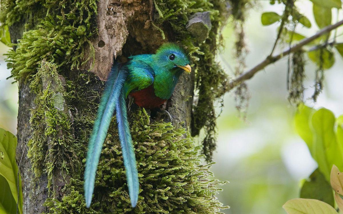 Фото бесплатно тропики, дерево, дупло, птица, перья, клюв, желтый, птицы