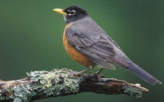 Бесплатные фото ветка,птичка,перья,хвост,клюв,желтый