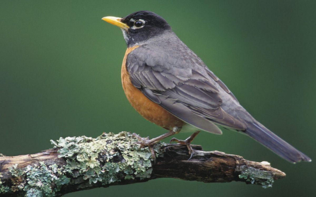 Фото бесплатно ветка, птичка, перья, хвост, клюв, желтый, птицы