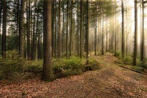 Бесплатные фото лес,деревья,солнечные лучи,пейзаж
